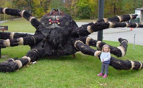spiderplayground